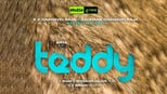 download and watch online Teddy